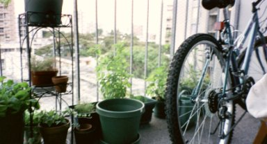 Here's another snapshot of her plants, as well as her new bicycle that helps her get to work!